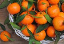 мандарины, стоимость мандаринов в Москве, абхазские мандарины, абхазские фрукты, сбор урожая, почему такие дорогие фрукты, себестоимость абхазских мандарин, абхазские или китайские мандарины