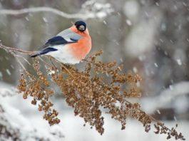 какой будет зима, зима 2018, погода предстоящей зимой, погода зима 2017 - 2018, зима 2017, погода морозы 2017, теплая зима, какой будет зима 2017