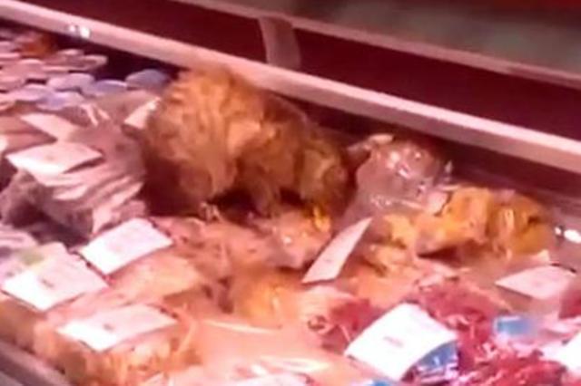 кот объелся морепродуктов видео, кот поел на 60000 рублей, кот Владивосток
